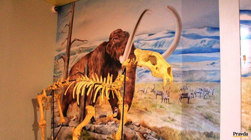 lev jaskynný, kostra, múzeum