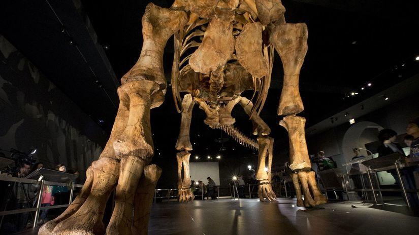 New York, paleontológia, prírodovedné múzeum,...