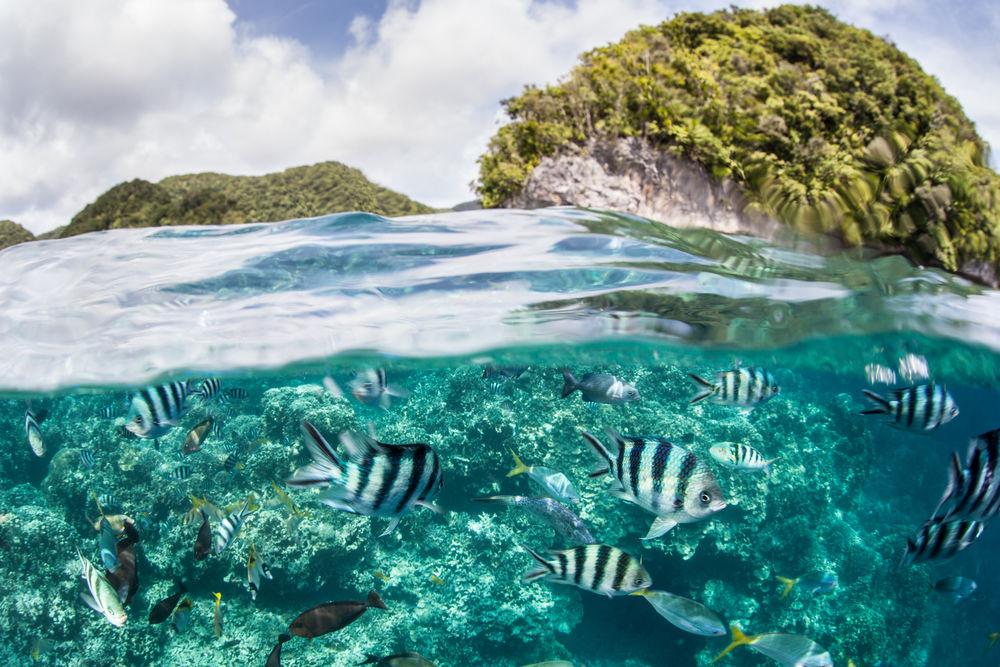 Palau, more, rybky, exotika, ostrov, dovolenka
