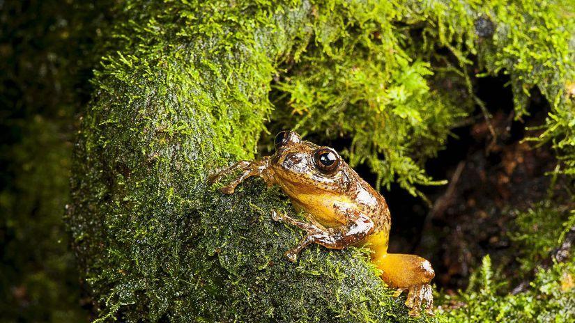 India, žaba, mach, les, zviera
