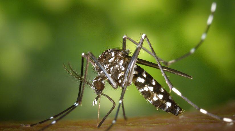 komár, Aedes aegypti, vírus Zika
