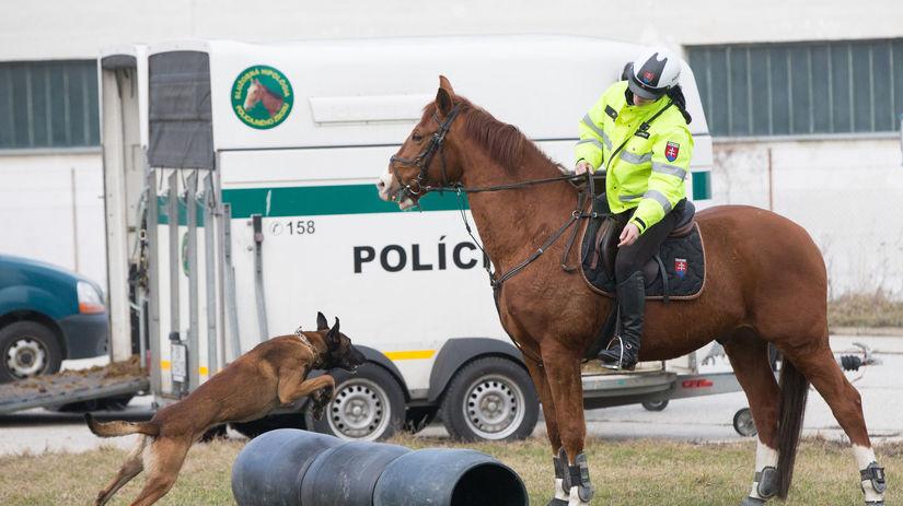 polícia, pes, kôň