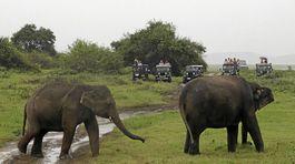 Slony, Srí Lanka, trus