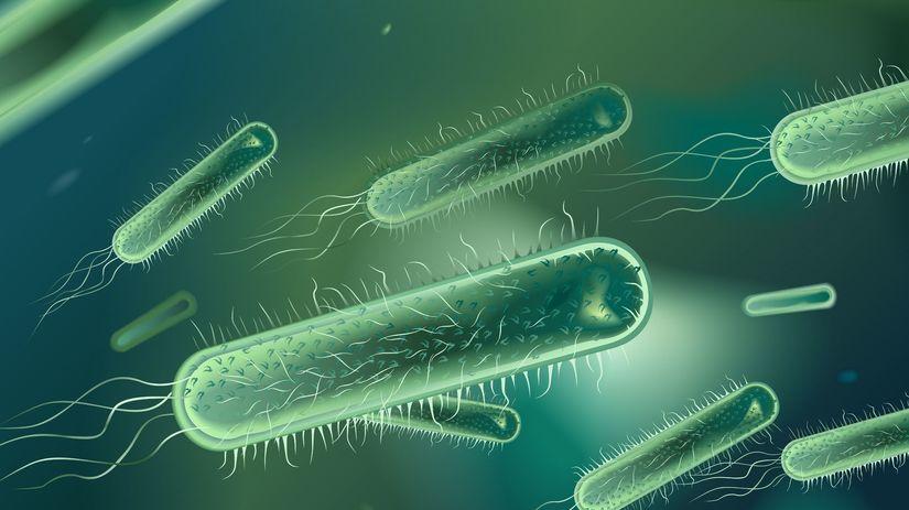 baktéria, bičík, Pseudomonas gregormendelii,...