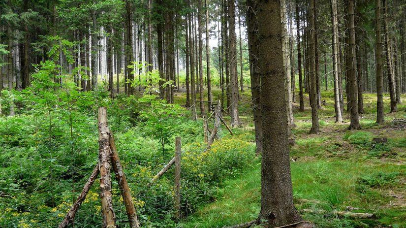les, porast, zeleň, tráva, stromy, plot, lesná...