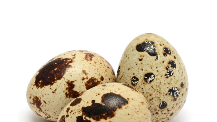 prepelica, vajíčka, prepeličie vajíčka