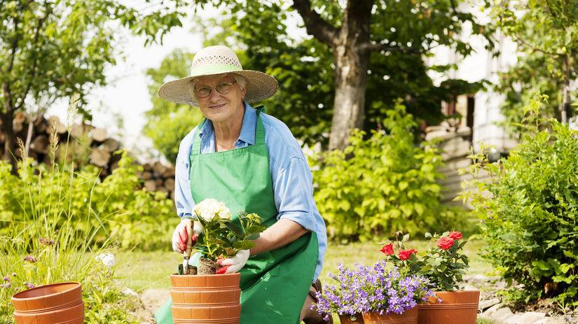 záhrada, dôchodca, dôchodok