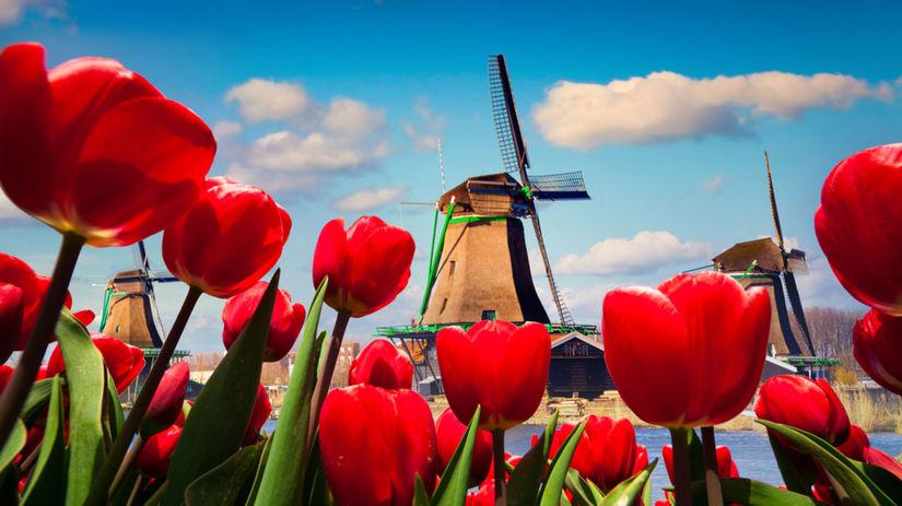 Holandsko, veterné mlyny, tulipány, NEST1 NEPOUZI