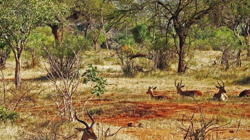 antilopy, Afrika, divé zvieratá, prírodná...