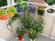 balkón, kvety