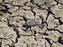 mŕtva ryba,  vyschnuté jazero, India, sucho, praskliny, pukliny