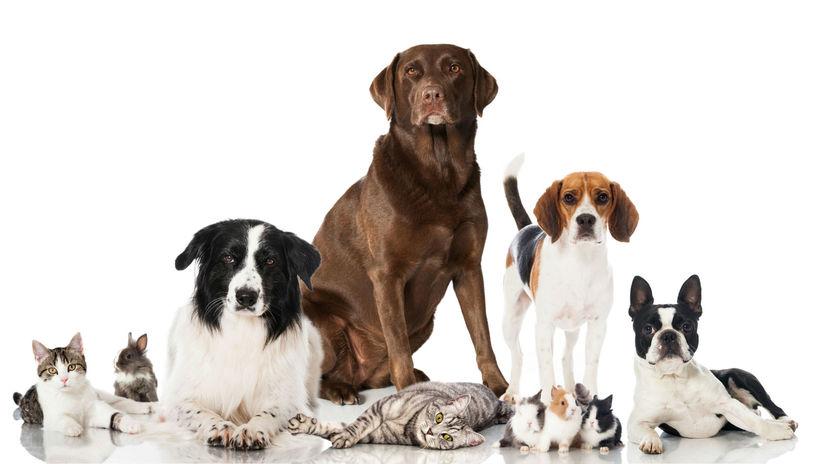 zvieratá, psy, pes, domáci miláčikovia
