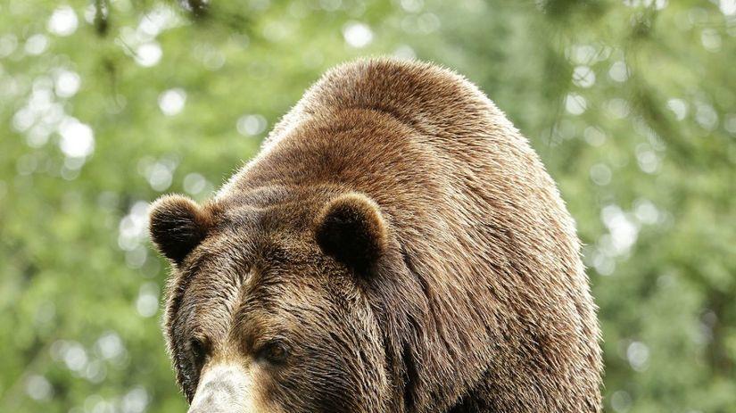 medveď, grizly, grizzly, medveď hnedý, zoo, zviera