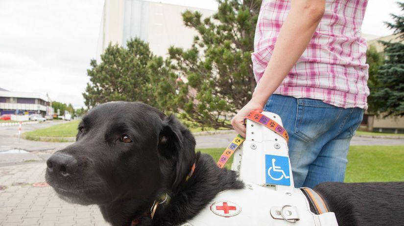 chris, Vodiaci pes, asistenčný pes