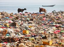 more, oceán, zvieratá, plasty