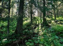 lesy, stromy,