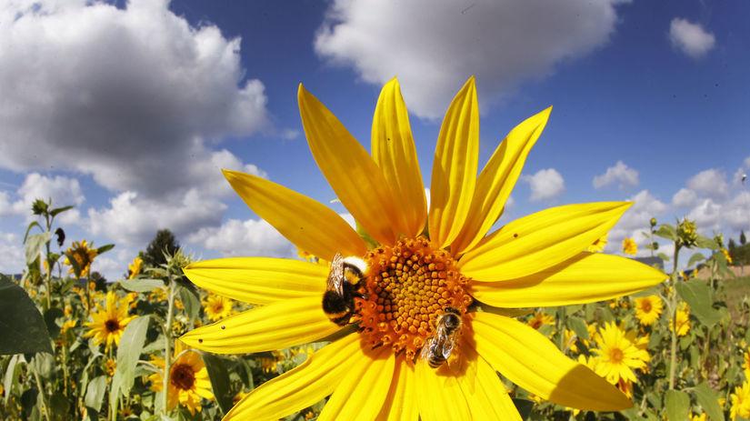 kvet, včely, opeľovanie, opelenie, čmeliak,...