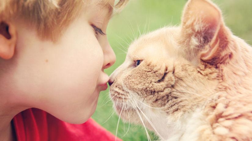 mačka, dieťa, zviera