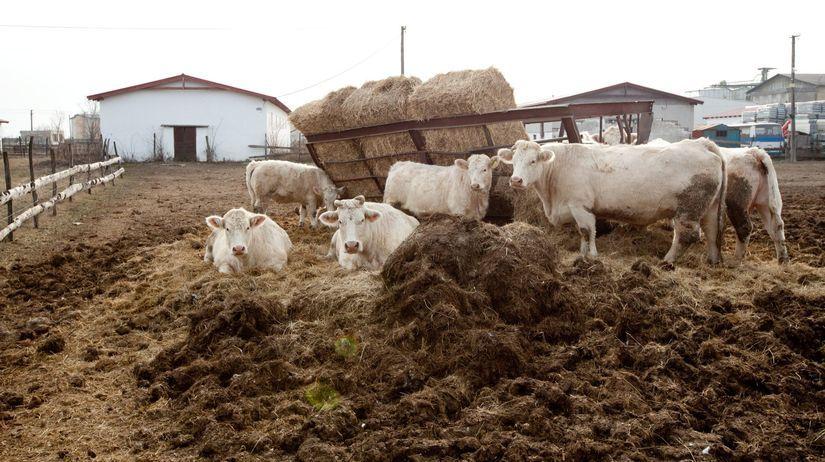 družstvo, kravy, chov, slovenské potraviny