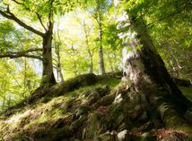 stromy, fagaras, boia mica, rumunsko, karpaty, hory,