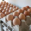 Zľavy neudržia ceny potravín