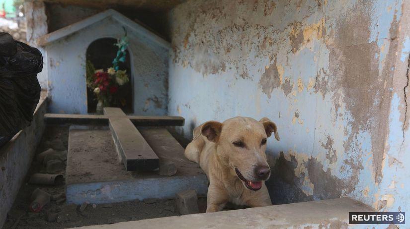 pes, Peru, hrob, cintorín