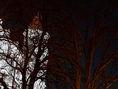 Bratislava, Bratislavský hrad, superspln, noc, Mesiac