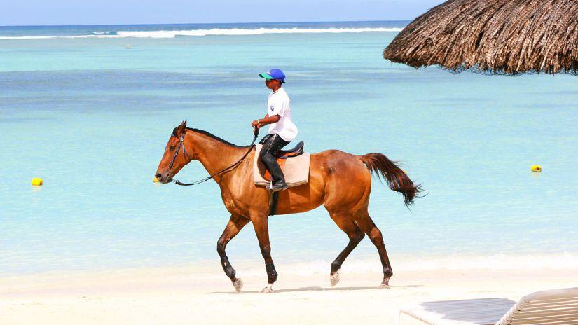 kôň, pláž, more, dovolenka, leto, cestovanie,...