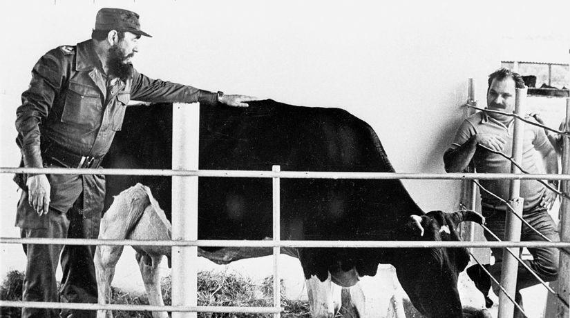 Fidel Castro, krava