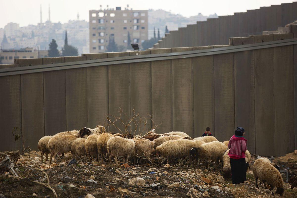 Izrael, Palestína, ovce, pastieri