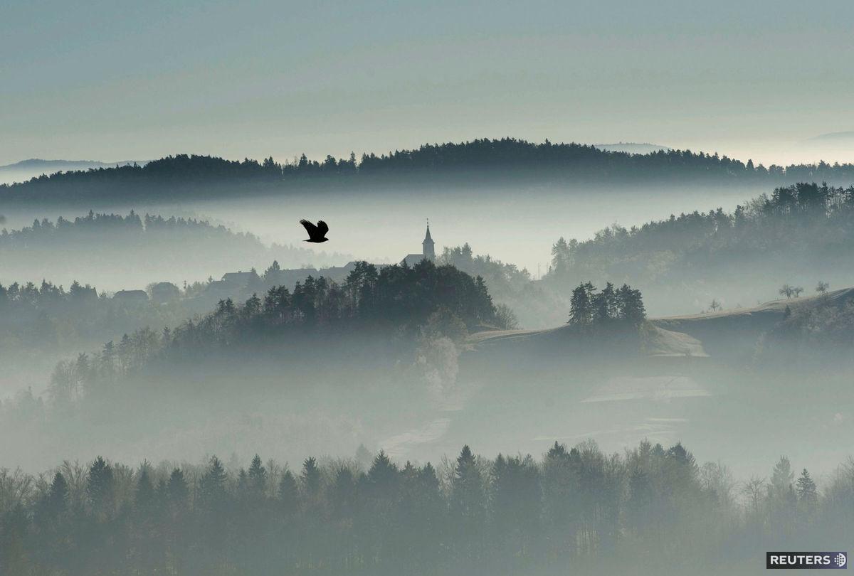 Slovinsko, hmla, opar, les,
