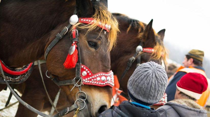 ťažné kone, Turiec