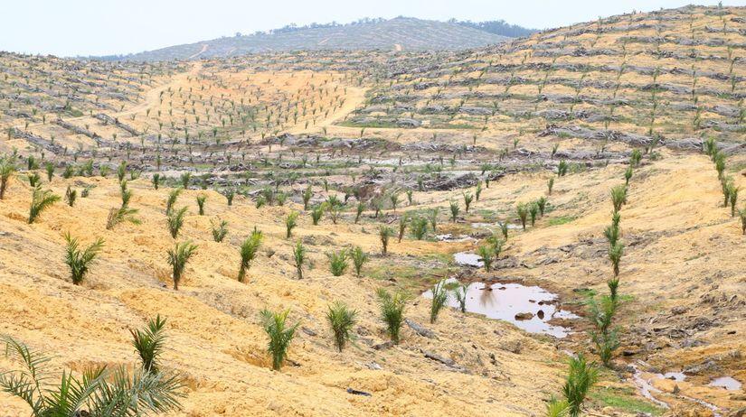 plantáž, palmový olej, greenpeace
