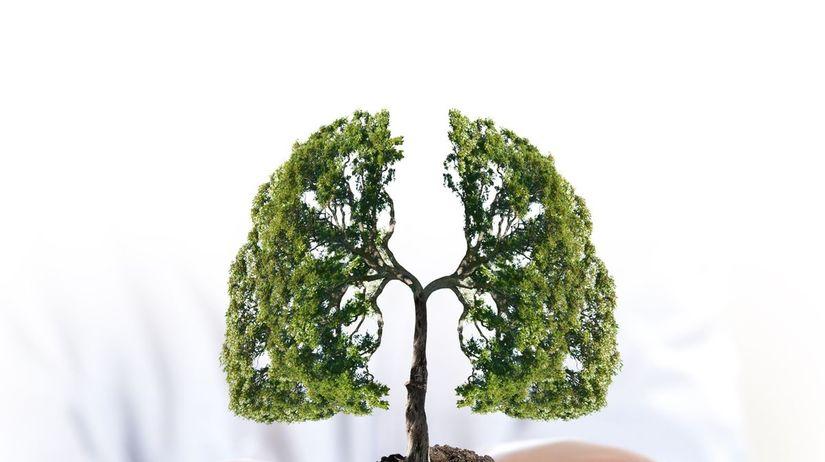 strom, pluca, zdravie, chochp