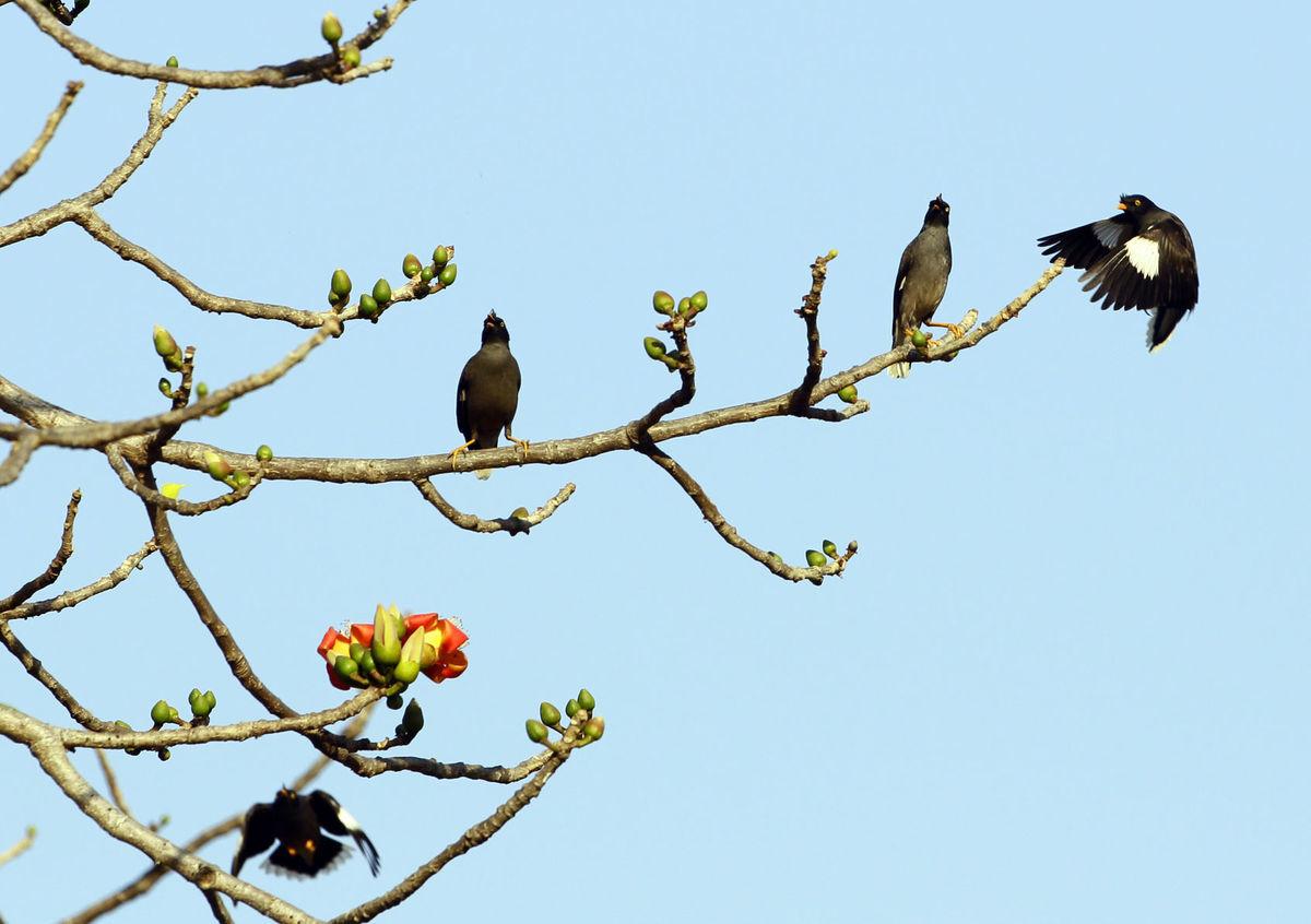 vtáky, strom, konár