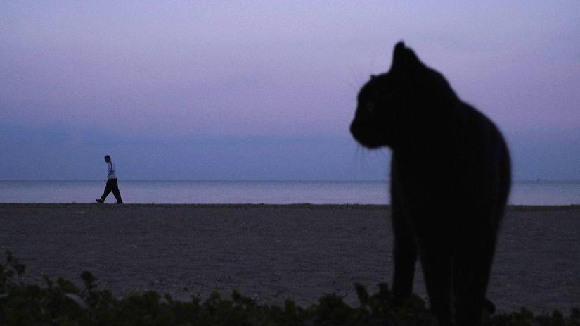 mačka, Cyprus, pláž, more, prechádzka