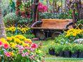 jar, záhrada, príroda, kvety