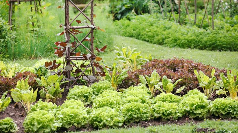 jar, záhrada, tráva