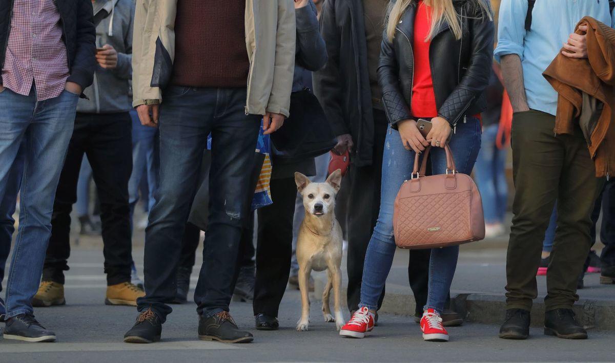 ľudia, dav, pes, nohy, prechod pre chodcov,