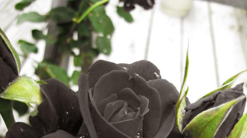 ruže, čierna ruža, turecko