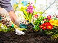 záharda, jar kvety