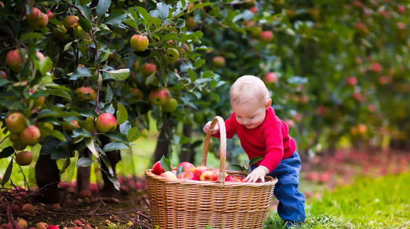 ovocie, jablká, dieťa, košík, jablko
