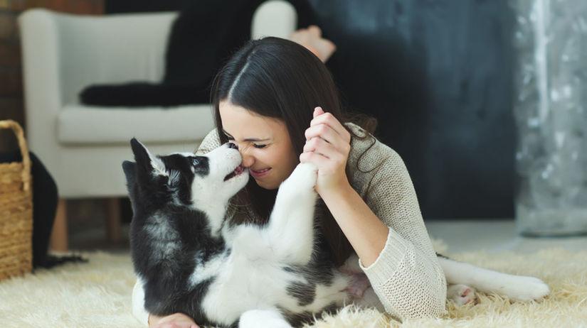 pes, šteniatko, hra