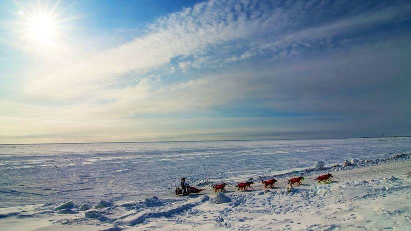 Aljaška, psie záprahy, zima, sneh,