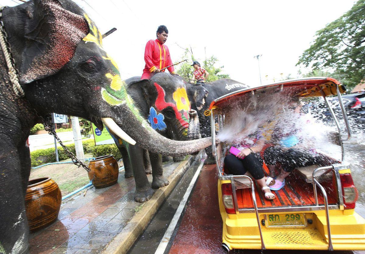 Thajsko, slon, voda, chobot