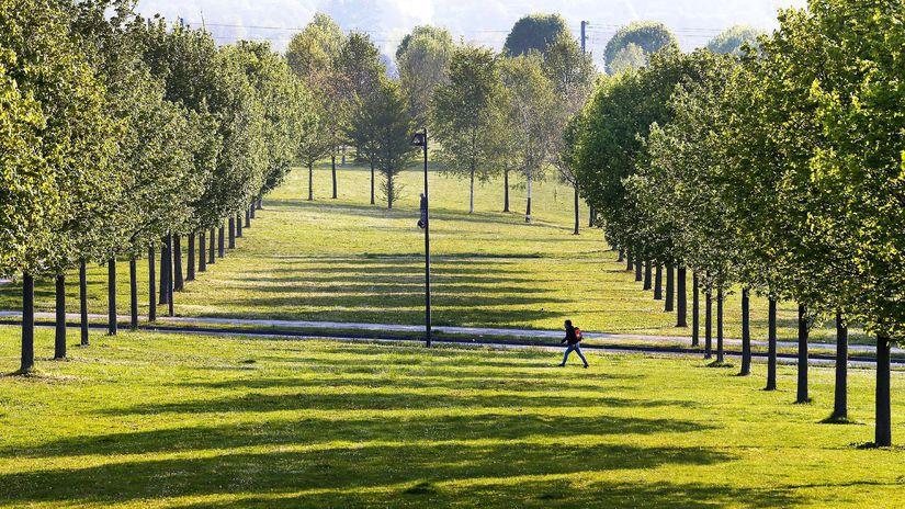 lúka, sad, prechádzka, stromy, príroda,...