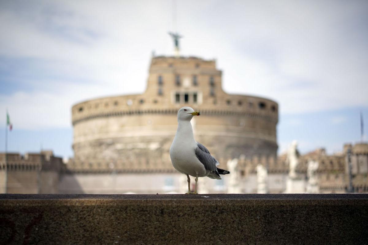 Taliansko, Anjelský hrad, Rím, čajka,