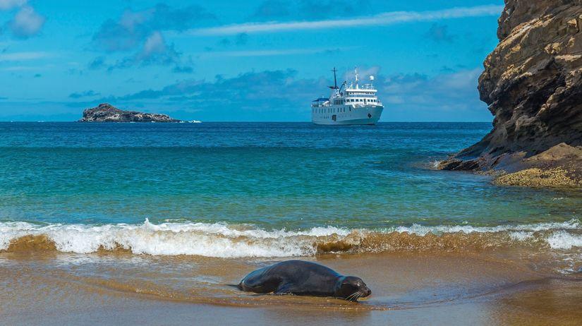 tuleň, pláž, more, oceán, breh, loď,...