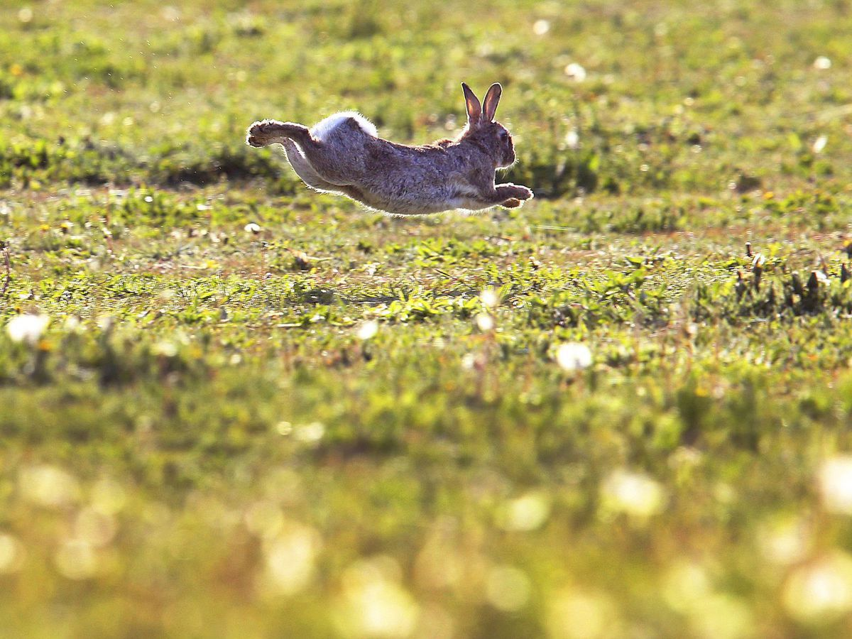 zajac, králik, zviera, príroda