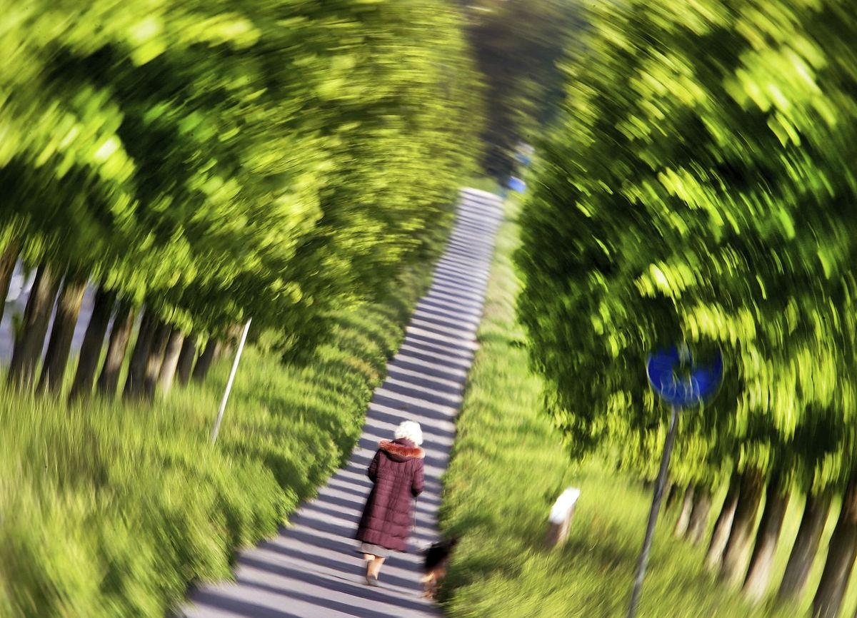 stromy, schody, park, prechádzka, aleja
